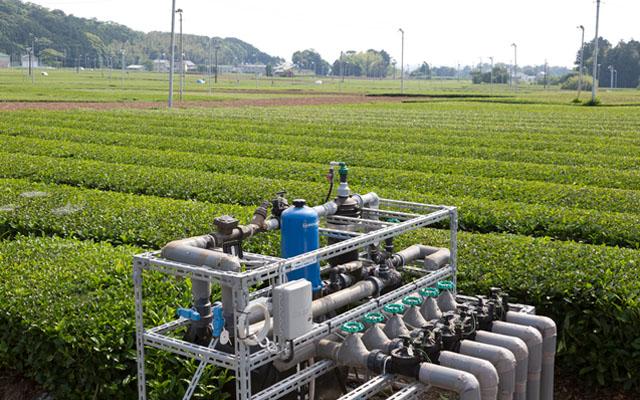 茶畑 (畑地かんがい事業)